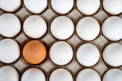 Brown egg surrounded by white eggs Royalty Free Stock Image