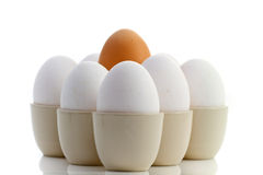 Brown egg surrounded by white ones Royalty Free Stock Images
