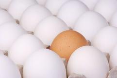 Brown egg among white eggs stock images