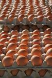 Brown Eggs Stock Image