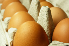 Free Brown Eggs Royalty Free Stock Photos - 1714948