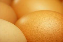 Free Brown Eggs Stock Photos - 1714953