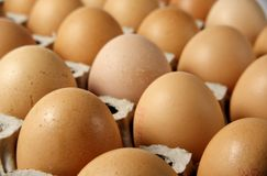 Brown eggs. In a tray royalty free stock photo