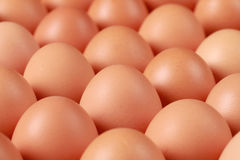 Brown Eggs Royalty Free Stock Images