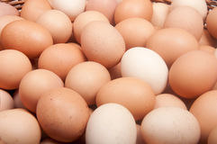 Brown eggs. Closeup of hundred brown eggs Stock Photography