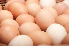 Brown eggs. Closeup of hundred brown eggs Stock Images