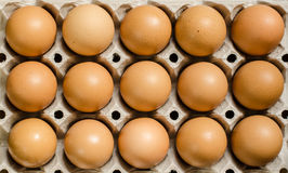 Brown eggs. Fifteen brown eggs in a carton Royalty Free Stock Images