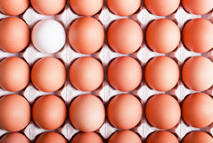 brown eggs arranged in a tray in the upper left corner of the egg white top view stock image