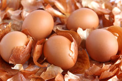 Brown eggs on the background of onion peel Stock Photos