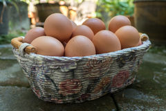 Brown eggs in Basket Royalty Free Stock Photo