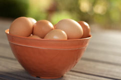 Brown eggs in bowl. Close view of a bowl of brown eggs in a natural outdoor country setting. The bowl of eggs are resting on a wooden table with the natural sun stock photos
