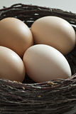 Brown eggs in a  brushwood nest. Royalty Free Stock Image