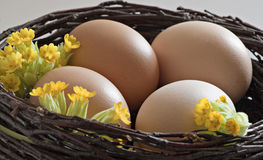 Brown eggs in a  brushwood nest. Royalty Free Stock Images