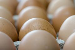 Brown eggs in cardboard container extreme macro crop Royalty Free Stock Images