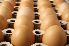 Brown Eggs in Cardboard Tray. Brown eggs in cardboard container stock image