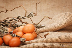 Brown eggs and catkin Royalty Free Stock Photos