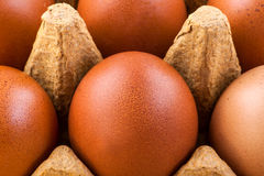 Brown eggs Stock Image