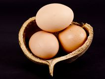 Brown eggs in a coconut shell royalty free stock photos