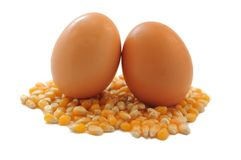 Brown Eggs on Corn Stock Photography