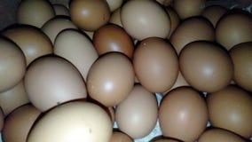 brown eggs in the dark stock photos