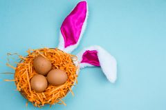 Brown eggs in a decorative nest with bunny ears on a vibrant blue background. Top view brown eggs in a decorative nest with bunny ears on a vibrant blue royalty free stock image