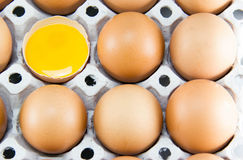 Brown eggs in detail on a tray Stock Photos