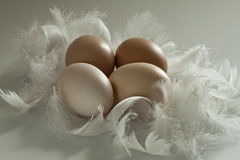 Brown eggs for Easter. Royalty Free Stock Photos
