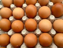 Brown eggs in. Egg an oval or round object laid by a female bird, reptile, fish, or invertebrate, usually containing a developing embryo. The eggs of birds are Royalty Free Stock Photo