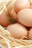 Brown Eggs with Feather Royalty Free Stock Image