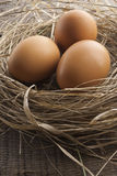 Brown eggs at hay nest. Macro shoot of brown eggs at hay nest in chicken farm Stock Photo