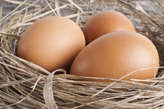 Brown eggs at hay nest in chicken farm. Macro shoot of brown eggs at hay nest in chicken farm Stock Photography