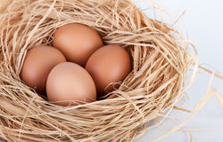 Macro shoot of brown eggs at hay nest in chicken farm. Brown eggs at hay nest in chicken farm stock photography