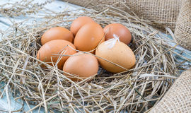 Brown eggs in hay nest. Chicken eggs in straw royalty free stock photos