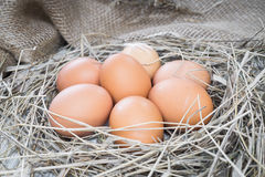 Brown eggs in hay nest. Chicken eggs in straw stock images