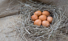 Brown eggs in hay nest. Chicken eggs in straw stock image
