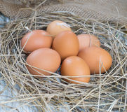 Brown eggs in hay nest. Chicken eggs in straw royalty free stock photo