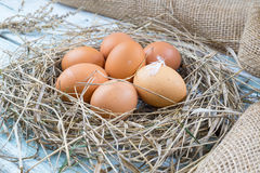 Brown eggs in hay. Eggs in nest, hen eggs. Sackcloth background royalty free stock images