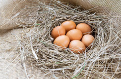 Brown eggs in hay. Eggs in nest, hen eggs. Sackcloth background stock images