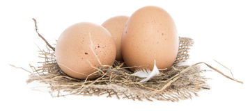 Brown Eggs isolated on white Stock Photography
