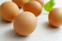 Brown eggs on a kitchen countertop Royalty Free Stock Image