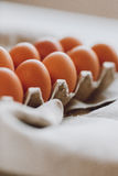 Brown eggs. Many brown eggs in a cardboard tray Stock Photos