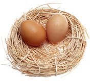 Brown Eggs in a Nest Royalty Free Stock Images