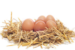 Brown eggs in a nest. A pile of brown eggs in a nest on a white background royalty free stock photography