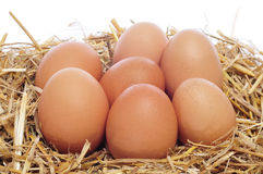 Brown eggs in a nest Stock Photos