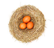 Brown  eggs in nest Stock Photos