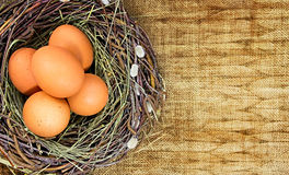 Brown eggs in nest on background with empty space Royalty Free Stock Photo