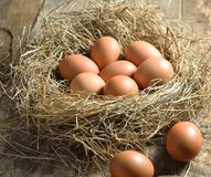 Brown eggs in a nest Stock Photography
