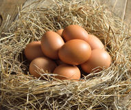 Brown eggs in a nest. Fresh brown eggs in a nest royalty free stock photo