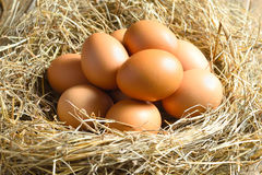 Brown eggs in a nest. Fresh hen eggs in a nest stock image