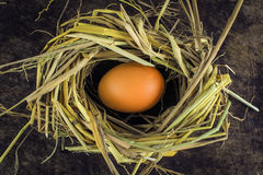 Brown eggs in nest hen eggs Stock Photography